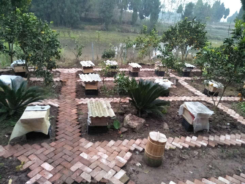 标准化蜂场建设